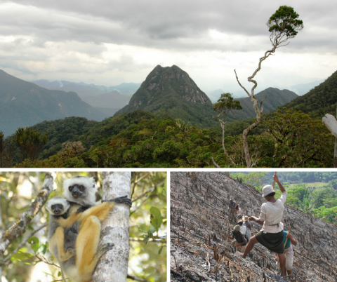 Scenes from Madagascar