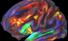 fMRI Image of Preteen Brain.